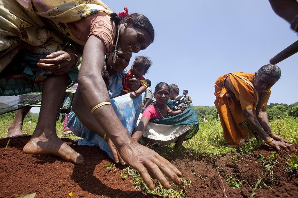 Projet Naandi-Danone de plantations d'arbres au village de Cheruvupakala