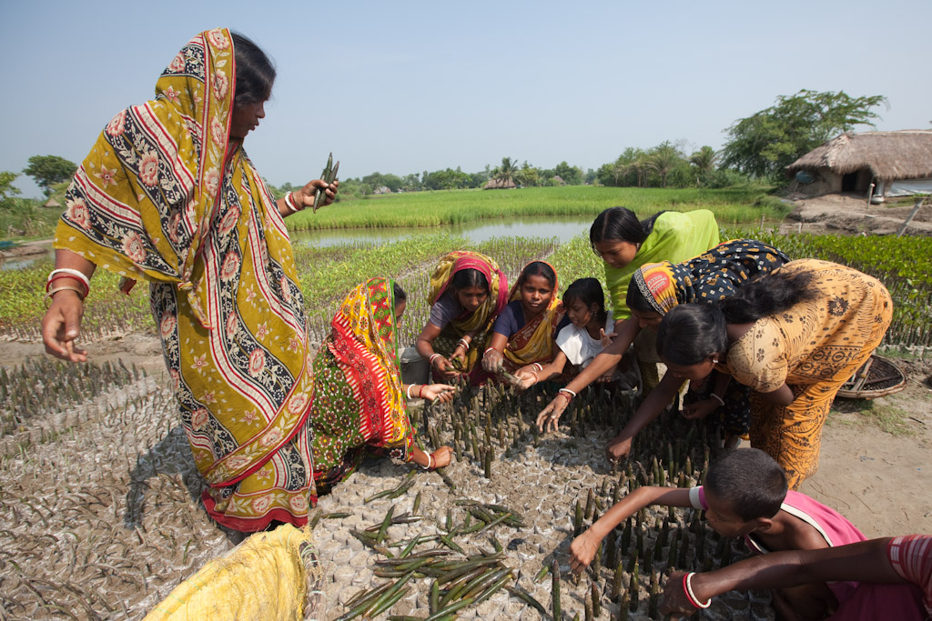 NEWS, Sundarbans