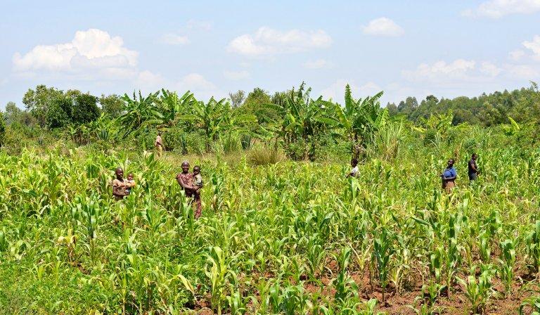 Mount Elgon Kenya Agroforestry