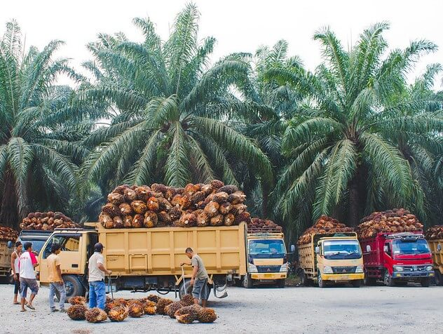 Palm fresh fruit bunches transport