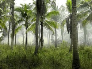 sustainable palm oil sourcing Indonesia