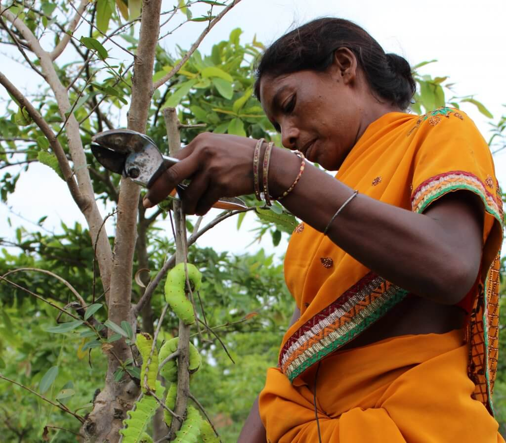 Photo agroforestry pradan